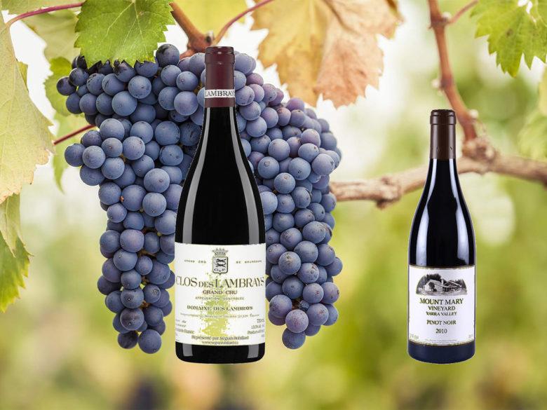 Pinot Noir på tilbud i februar